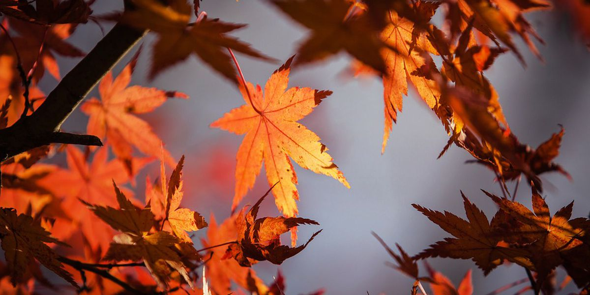 Fall colors peeking through in spots, experts say colder weather is