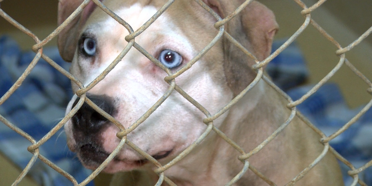 First look at dogs -- and new puppies -- rescued from possible dog fighting in York County