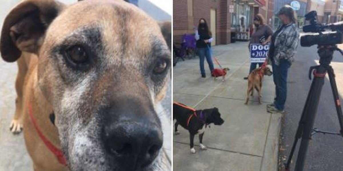 Animal rescues back in business to hold public fundraising events in N.C.'s Phase 3
