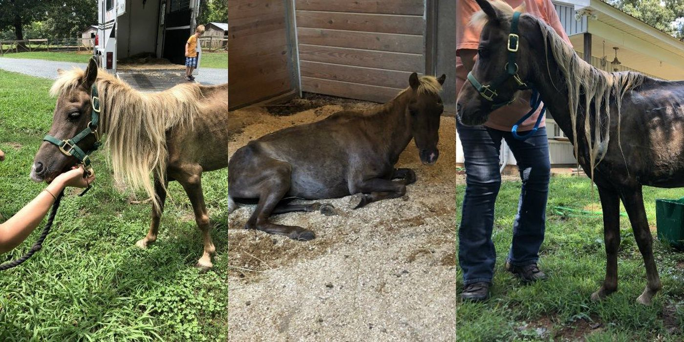 Stranded Neglected Horse Forms Bond With Golden Retriever At Nc