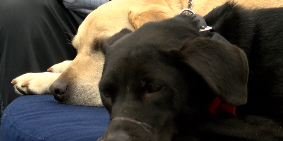 The Iredell-Statesville School district has a new therapy dog to assist students