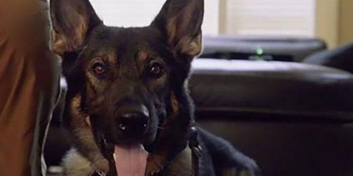 NC company will use K-9 to search your child's bedroom for drugs