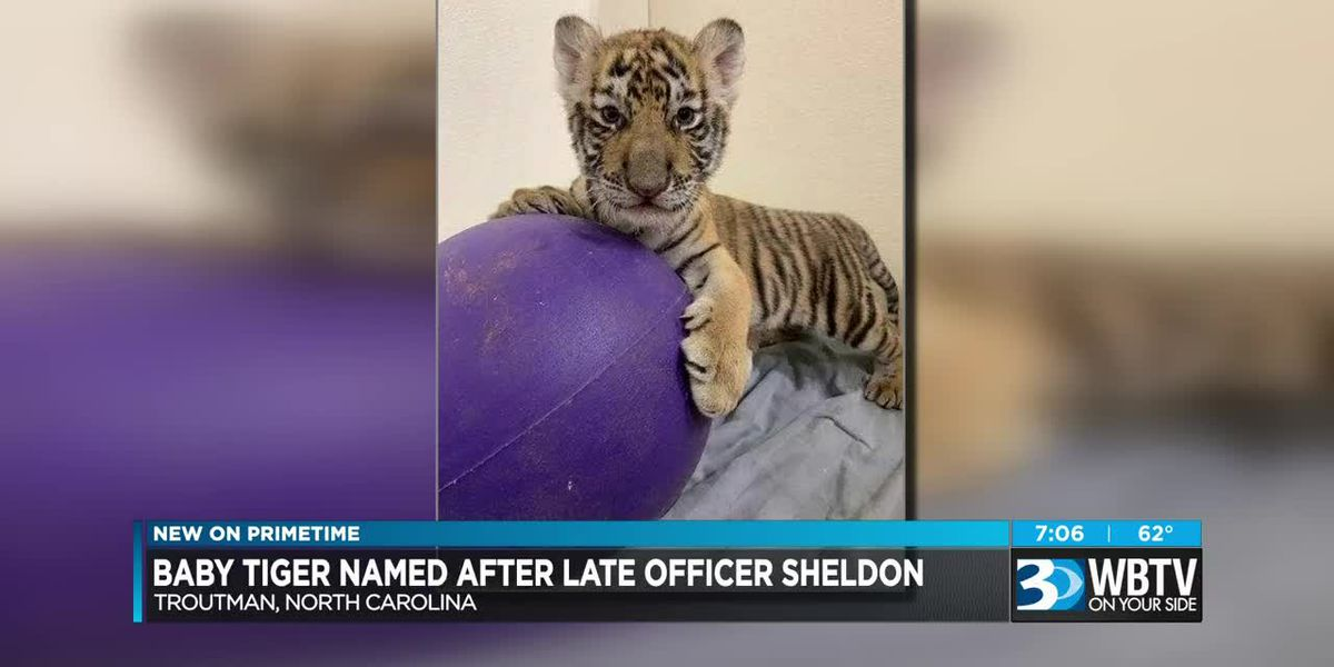 Tiger cub at Zootastic Park named in honor of fallen Mooresville officer
