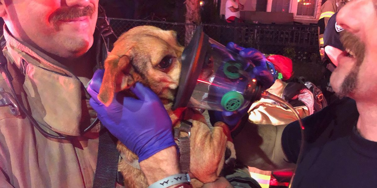 Crews save two puppies in Myrtle Beach fire
