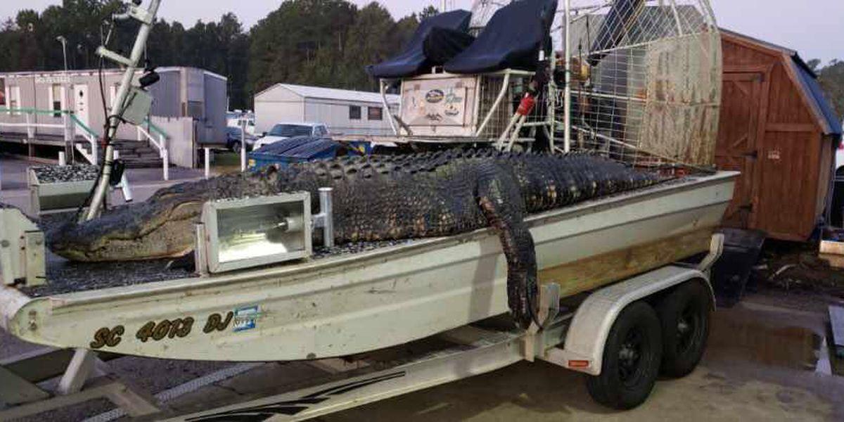 SC man catches massive gator in Santee lake