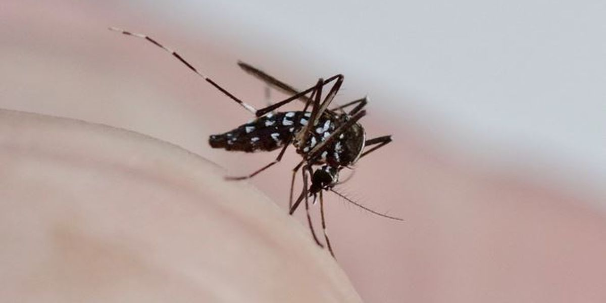 Charlotte ranks 9th worst in country for mosquitoes, according to pest control specialists