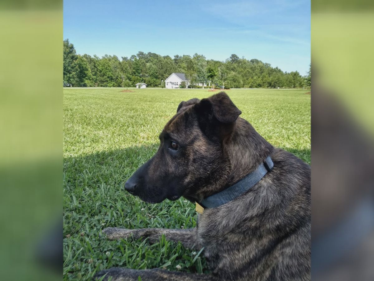 Pender County man suing sheriff's department hopes lawsuit saves dogs' lives
