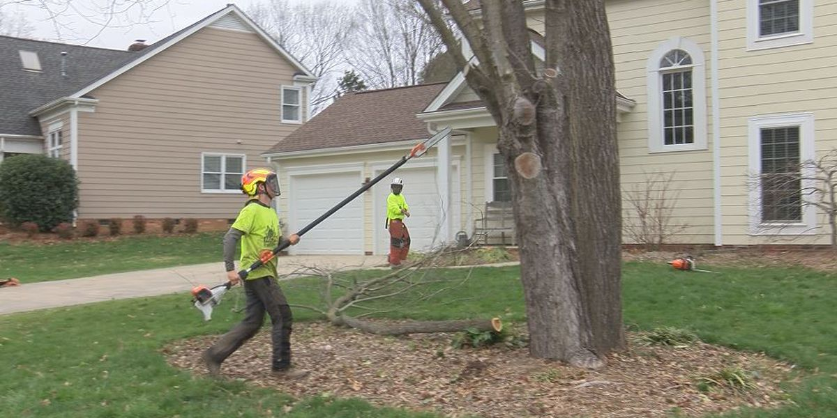 Tree removal crew offers tips as storm cleanup continues