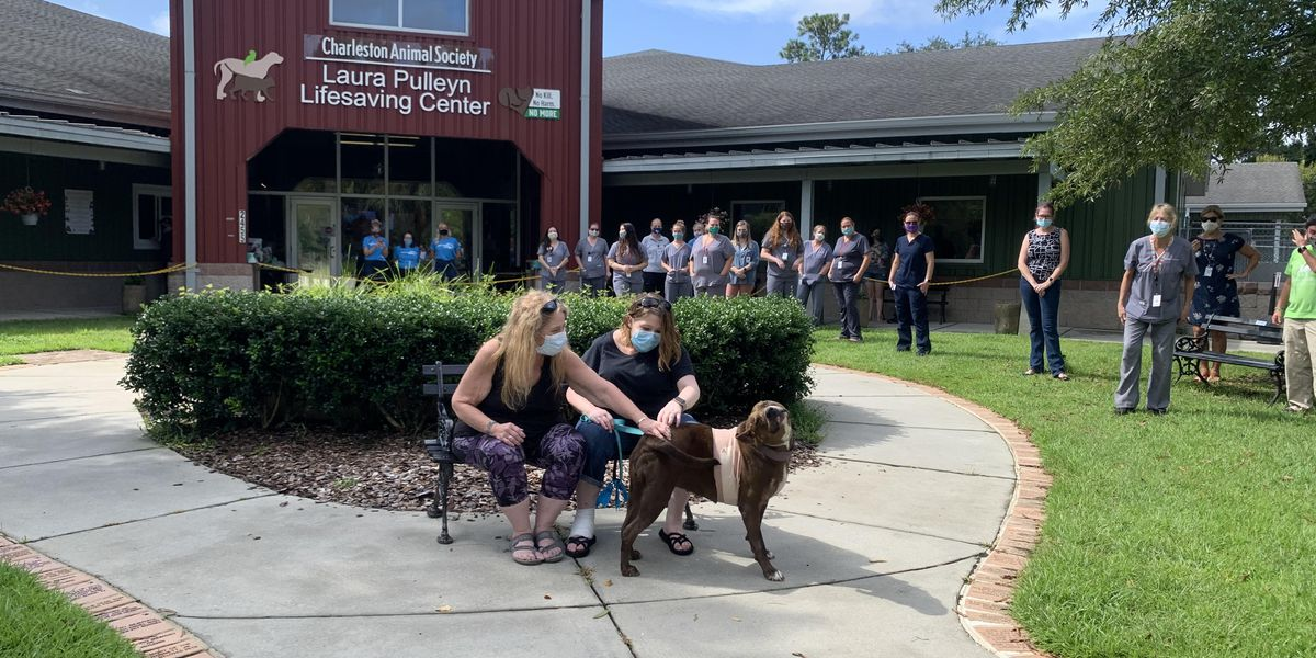 New York family reunites with dog in N.Charleston after owner dies in bicycle crash