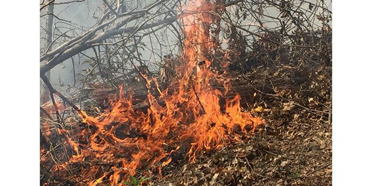 Forest fire forces evacuation of Caldwell County neighborhood