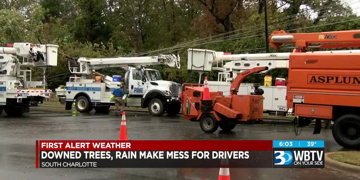 Downed trees, rain make mess for drivers