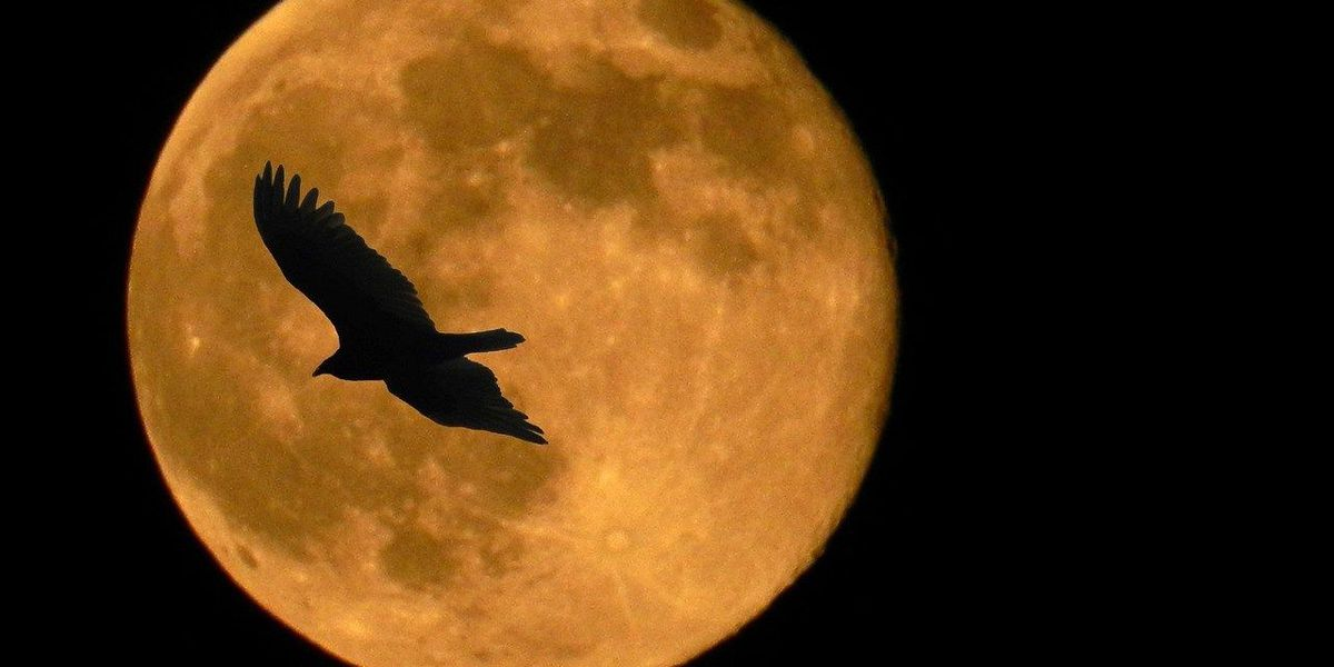 You won't have to wait long for the first supermoon of 2018