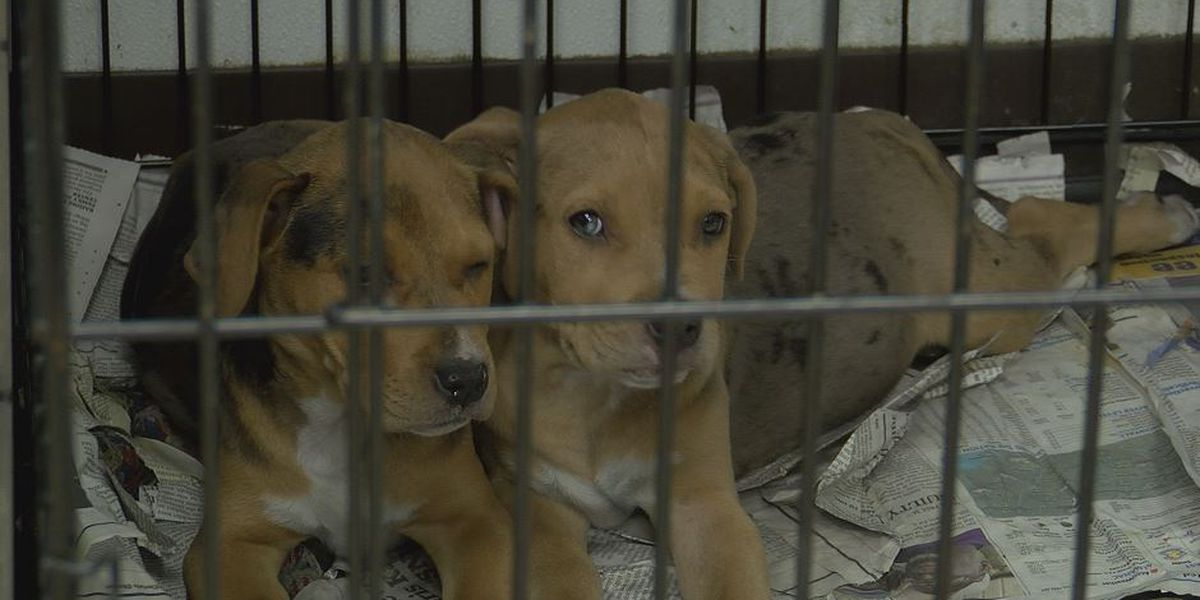 Animal shelters receive 'gift returns' of pets after the holidays