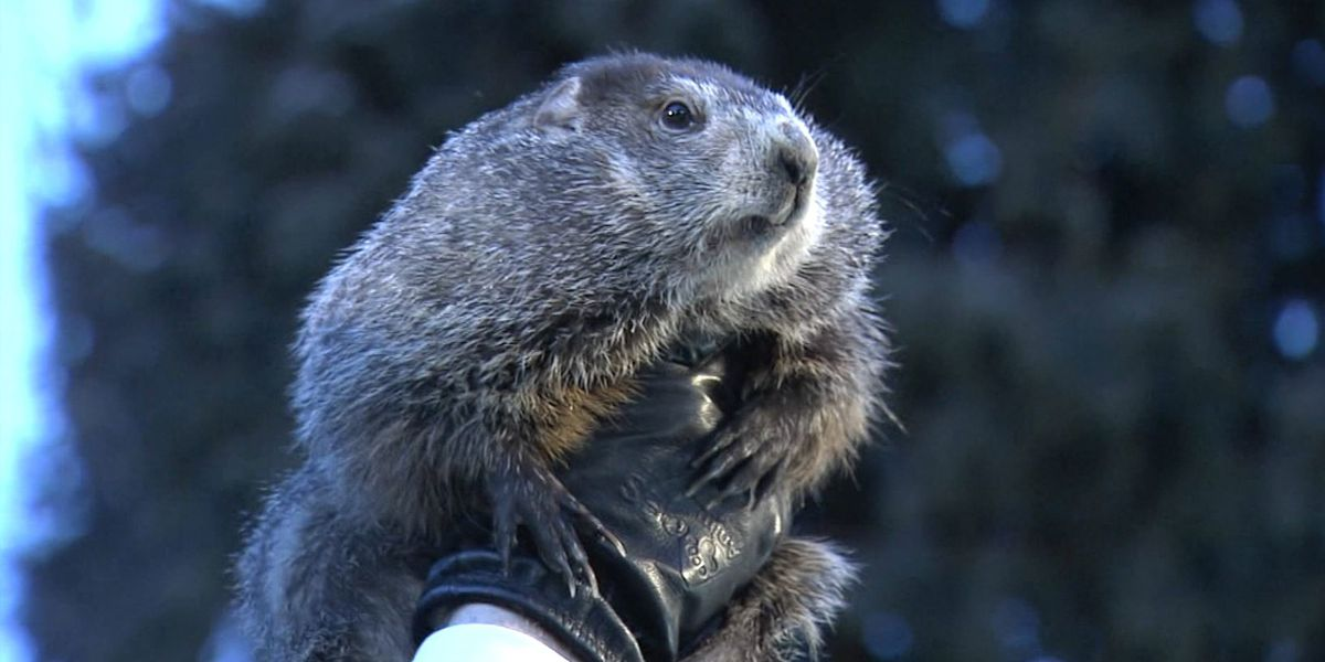 PETA wants Punxsutawney Phil replaced with robot