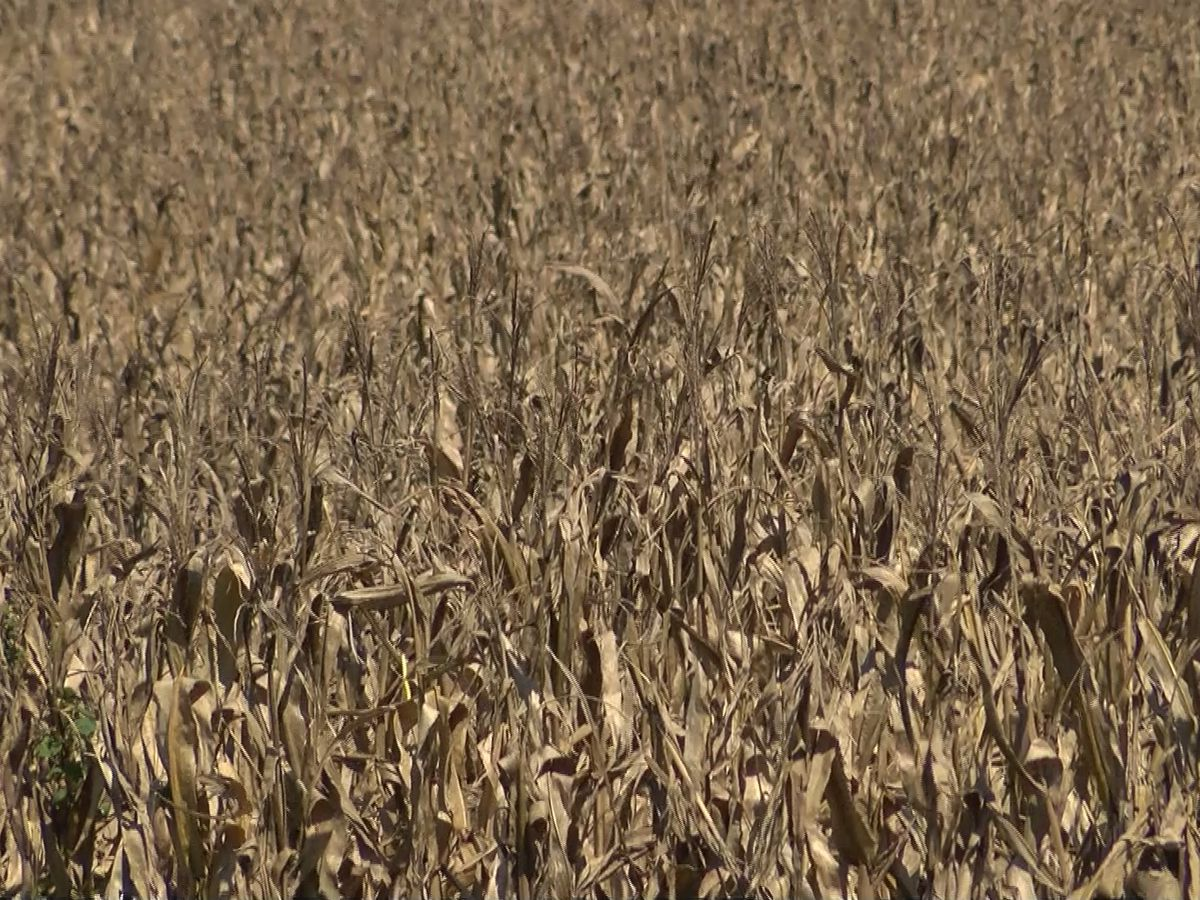 Local farmers suffer crop loss after Florence
