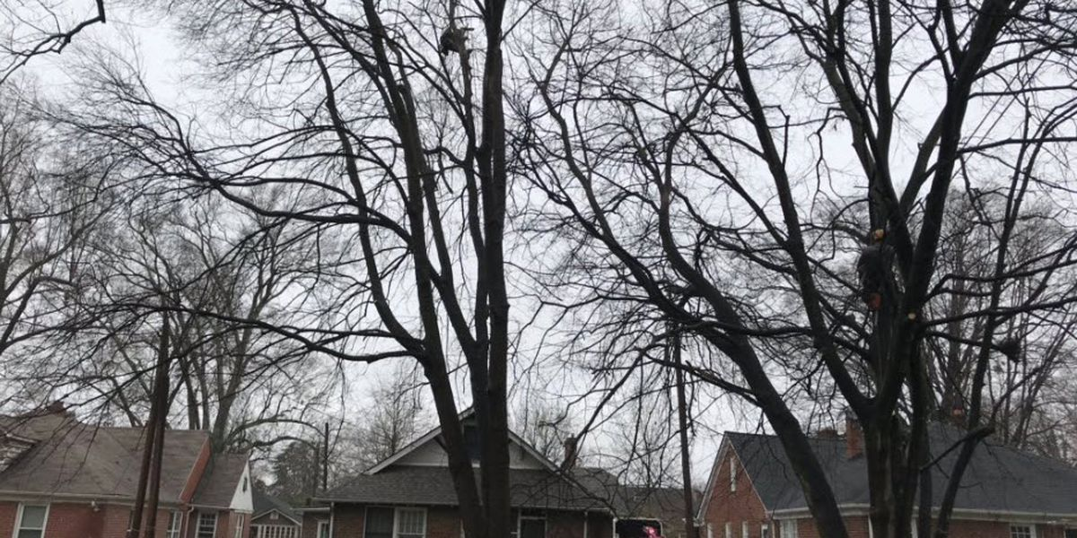 Charlotte testing out pilot program to help homeowners with trouble trees