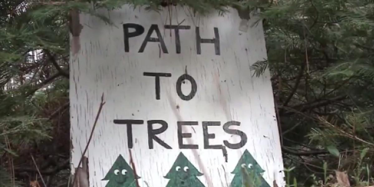 Thieves ransack family-run Christmas tree farm