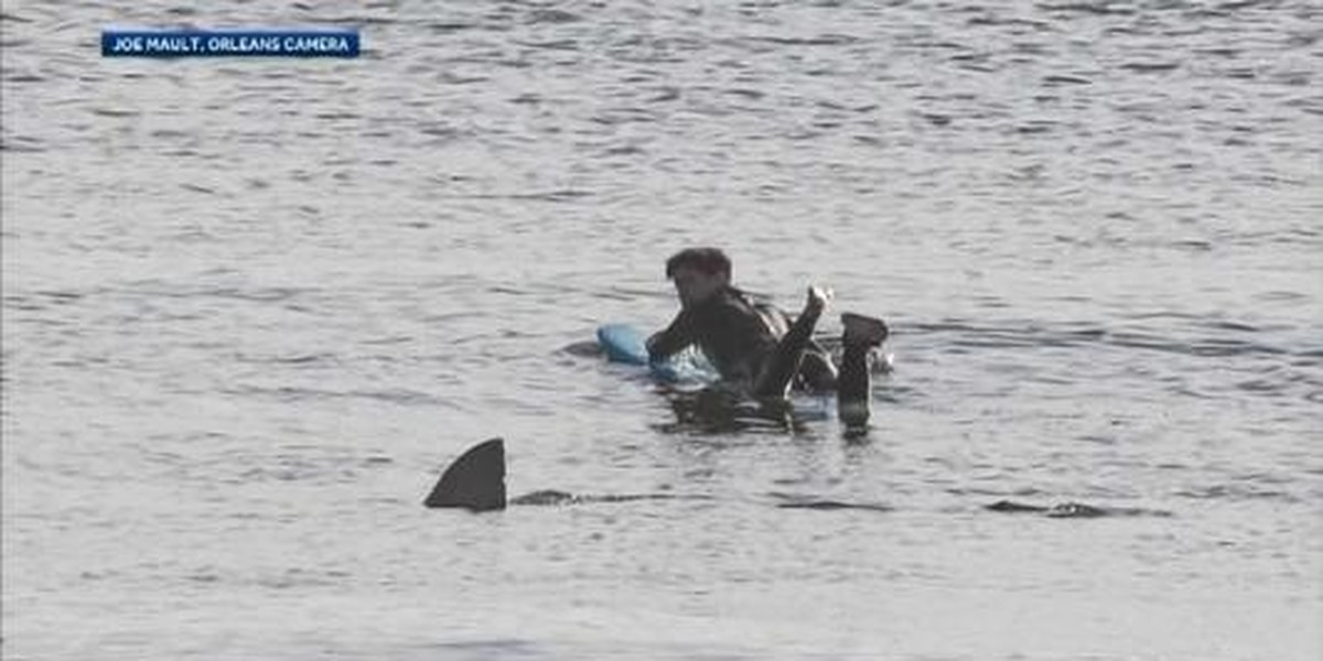 Mass. surfer has close call with great white shark