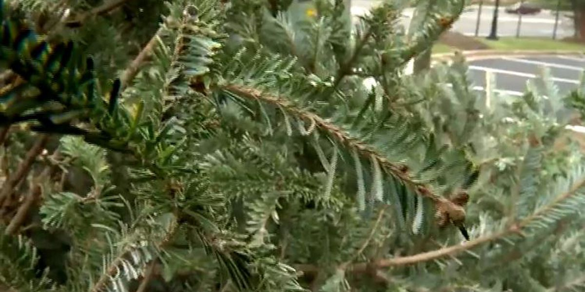 Catawba County Christmas Tree Recycling