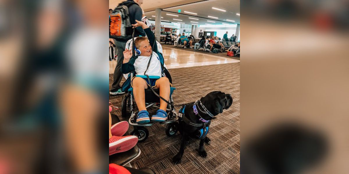 Hickory mother wants to educate community on service dogs