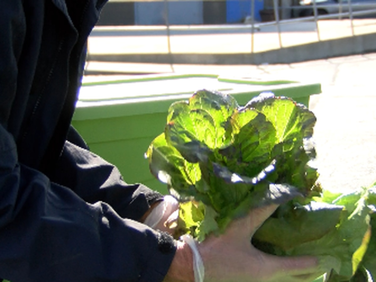 Student-grown vegetables donated to local organization to help with coronavirus