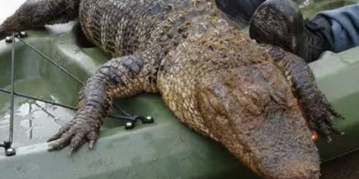 Man finds large gator while fishing at park in Gaston County
