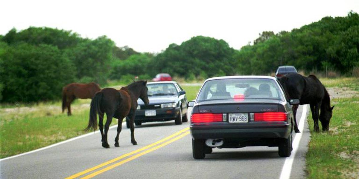 28 wild horses drowned off Outer Banks in 'mini tsunami' created by Hurricane Dorian