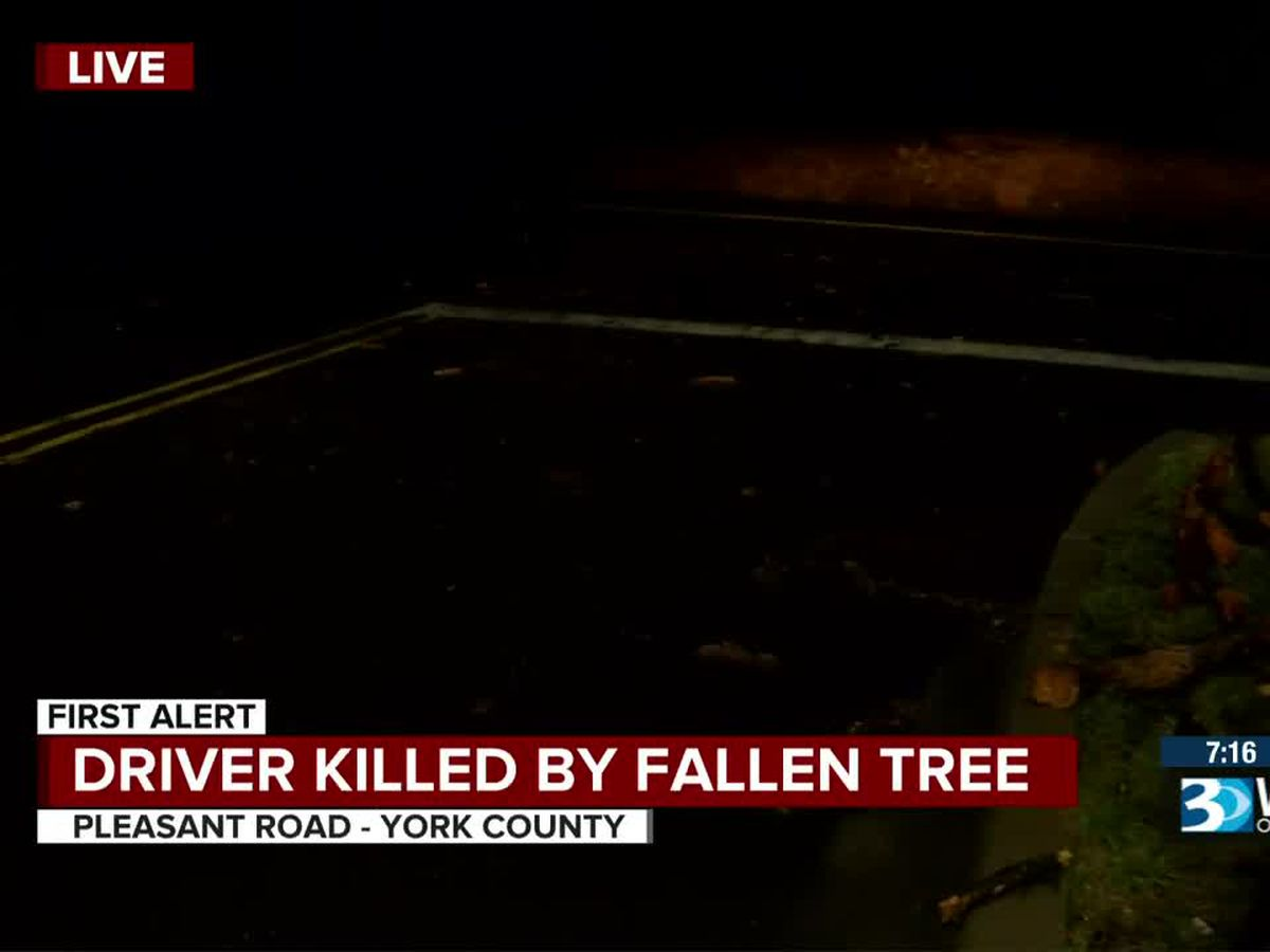 80-year-old woman killed by falling tree in York County identified