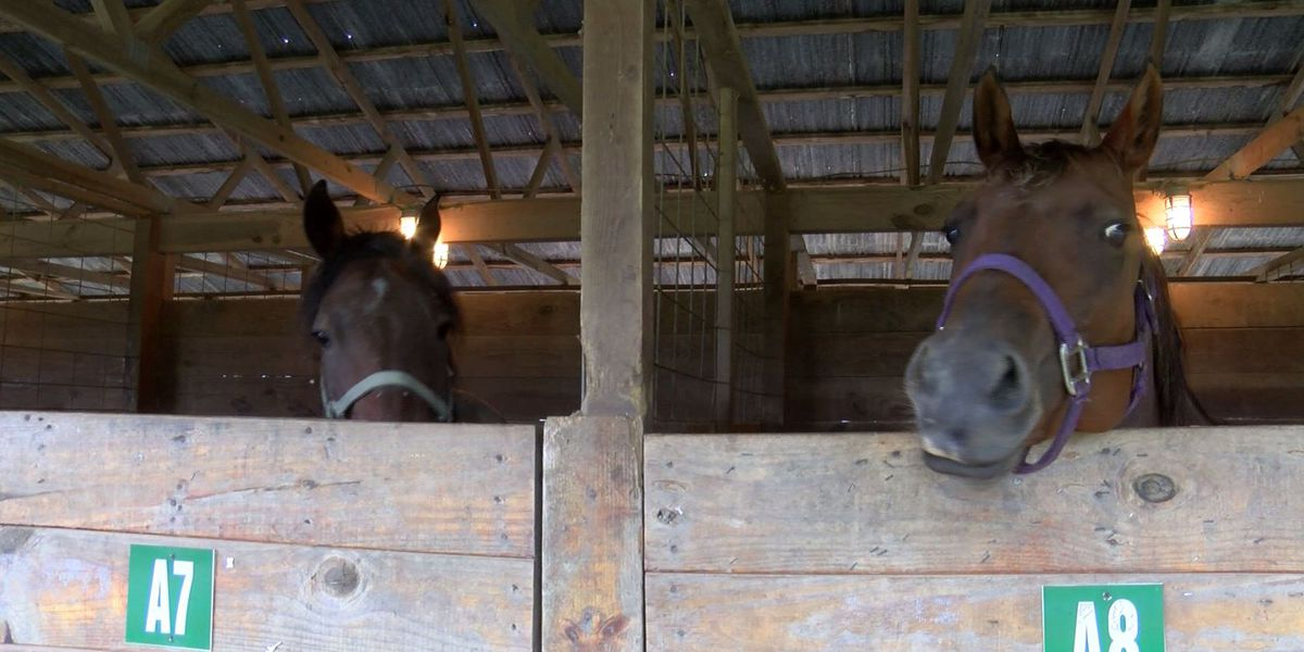 Monroe ranch welcomes Florence evacuees and their horses