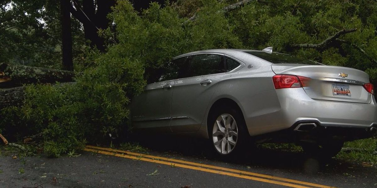 Uprooted tree lands on moving car in Fort Mill