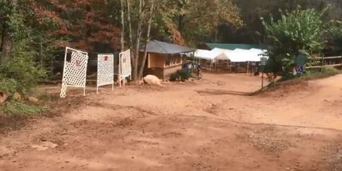 Investigators working a major gemstone theft in Alexander County
