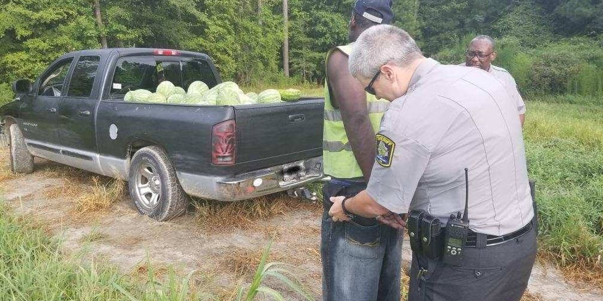 NC watermelon thief nabbed after he gets stuck in field