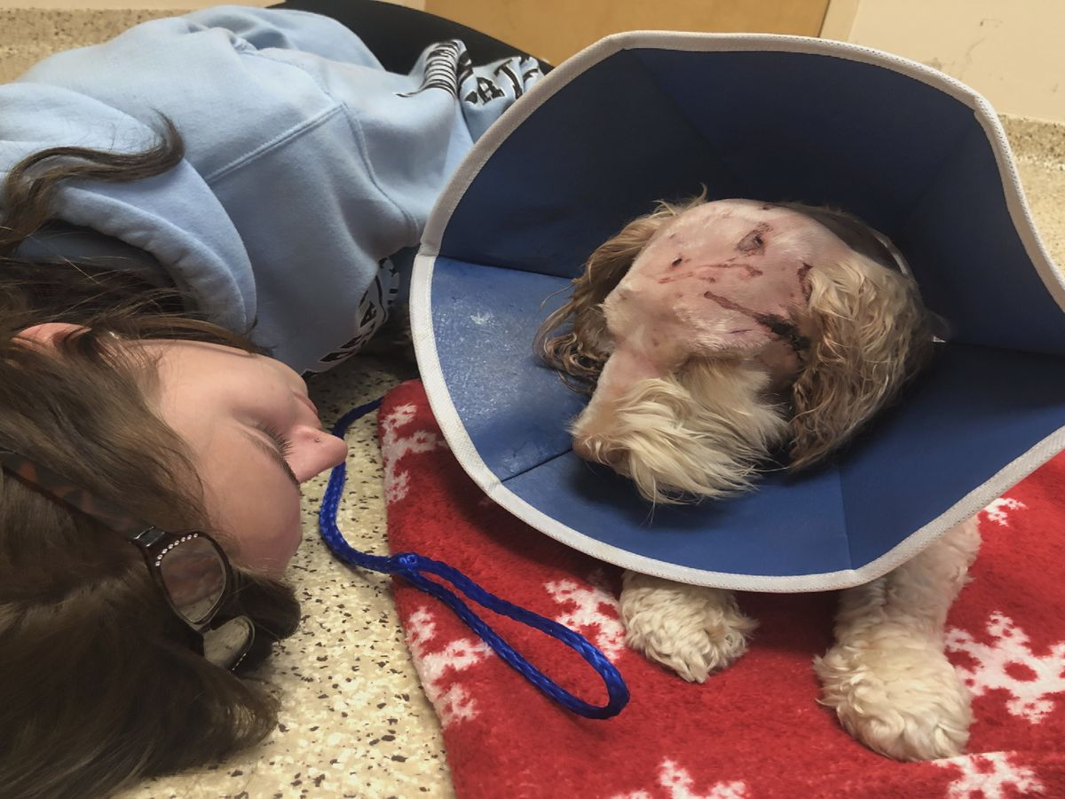 Woman, service dog injured in alleged Indian Trail dog attack