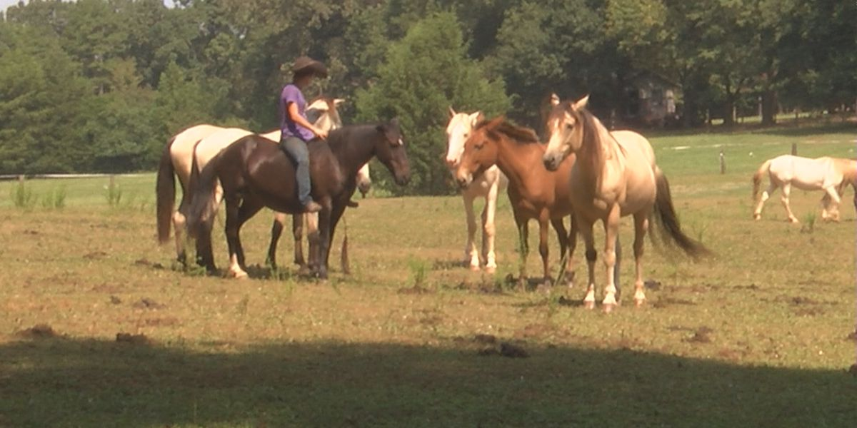 Mustang sanctuary evacuates dozens of therapy horses, receives gift from anonymous donor