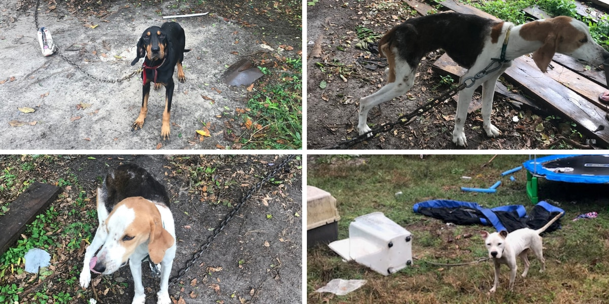 Deputies find dogs, puppies abandoned, emaciated in Georgetown; 1 arrested