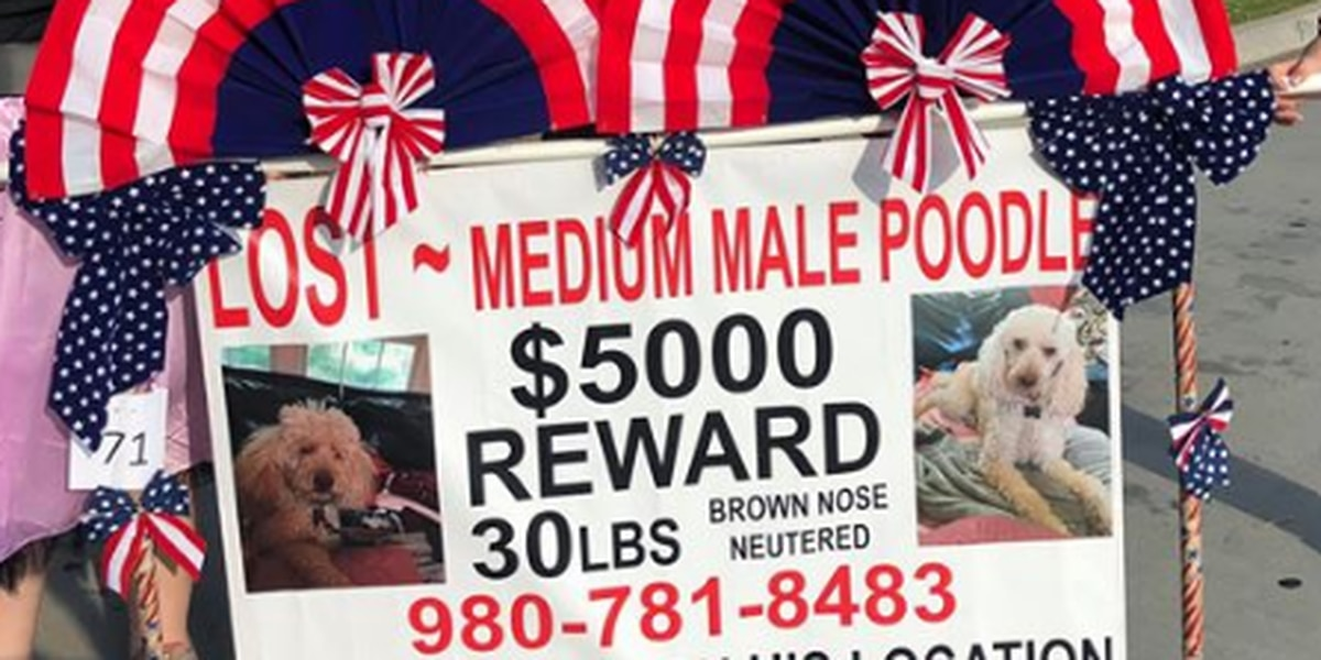$5000 reward offered for dog missing for more than a year