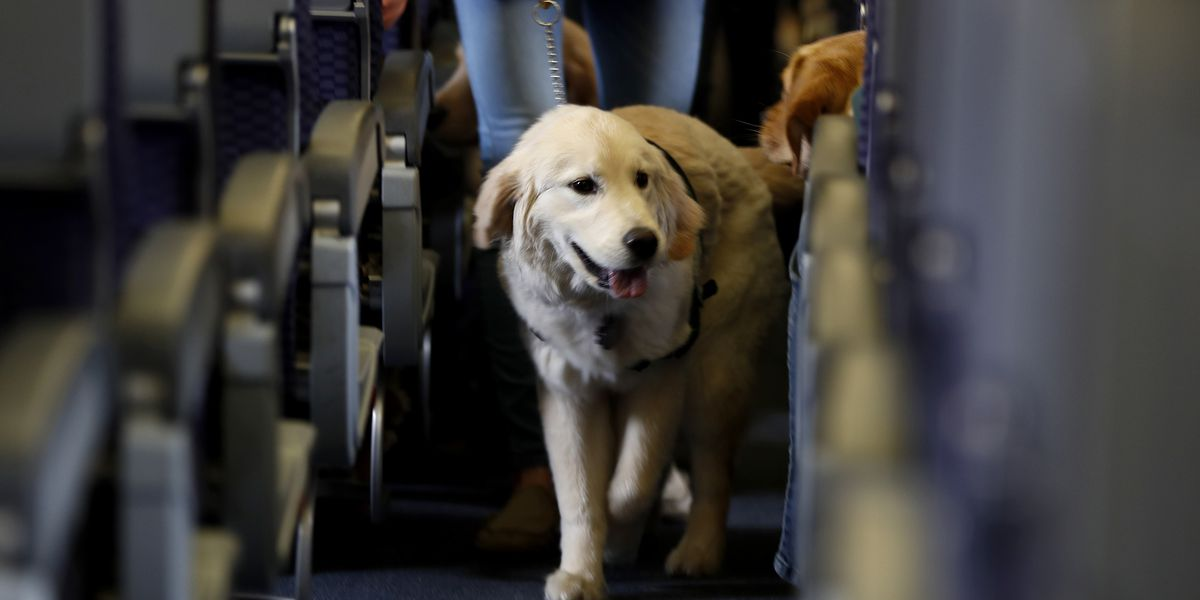 US tightens definition of service animals allowed on planes