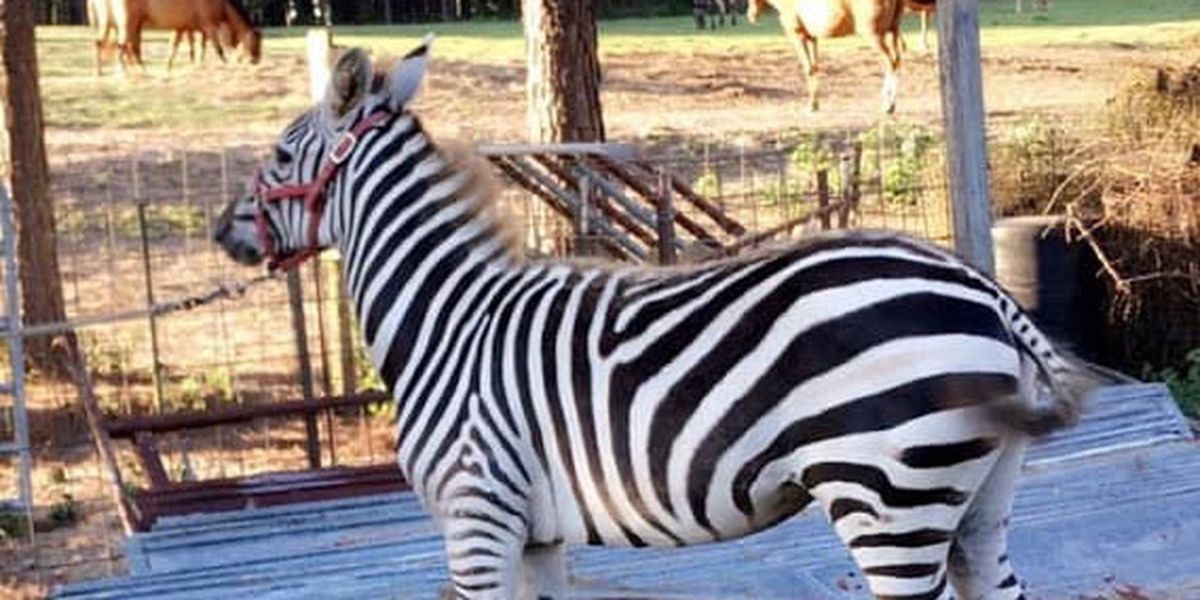 Zebra, 3 other animals shot and killed at south Alabama farm