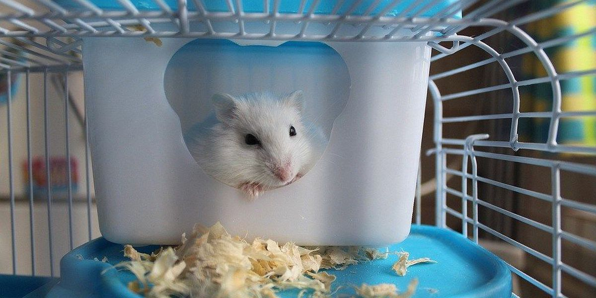 Florida woman says airline told her to flush emotional support hamster down the toilet