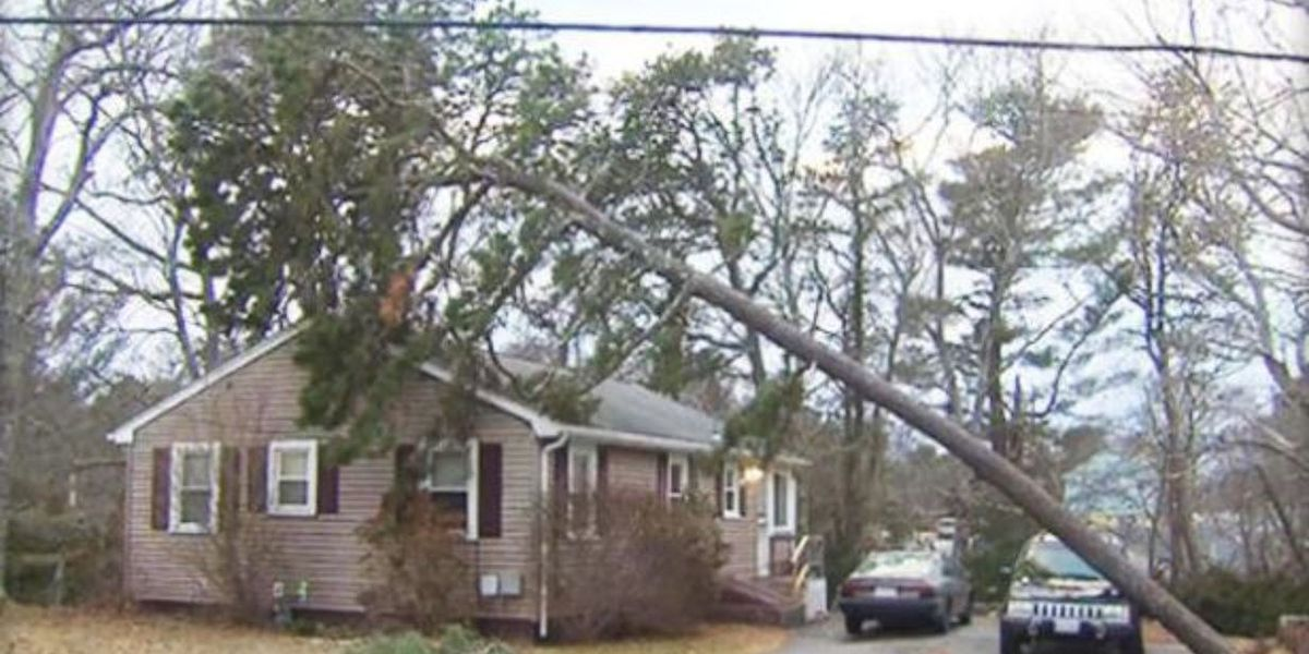 Family credits Jeep with saving house from being crushed by tree during Nor'easter