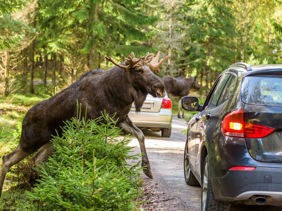 Toyota of N Charlotte discusses the Moose Test