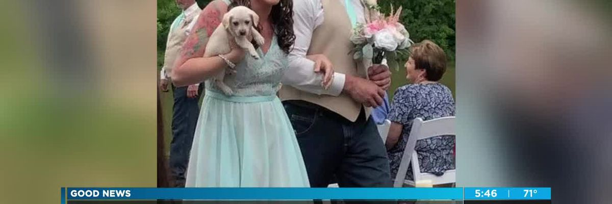 Abandoned puppies made part of wedding ceremony