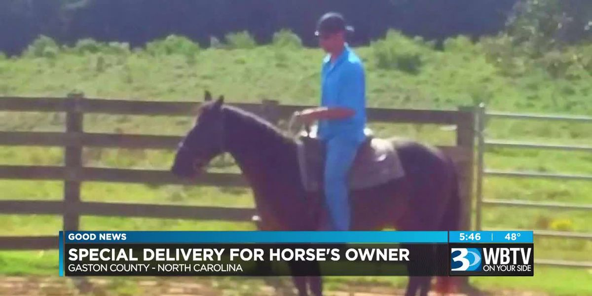 Special delivery for horse's owner