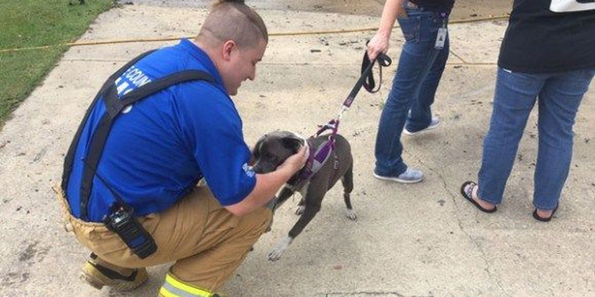 Dog climbs inside sofa to escape NC house fire