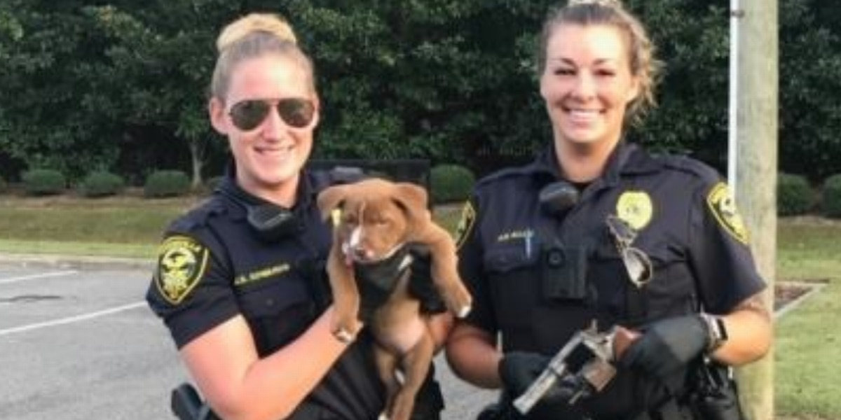Puppy playing in NC yard digs up a .38 revolver. It was loaded, too, cops say