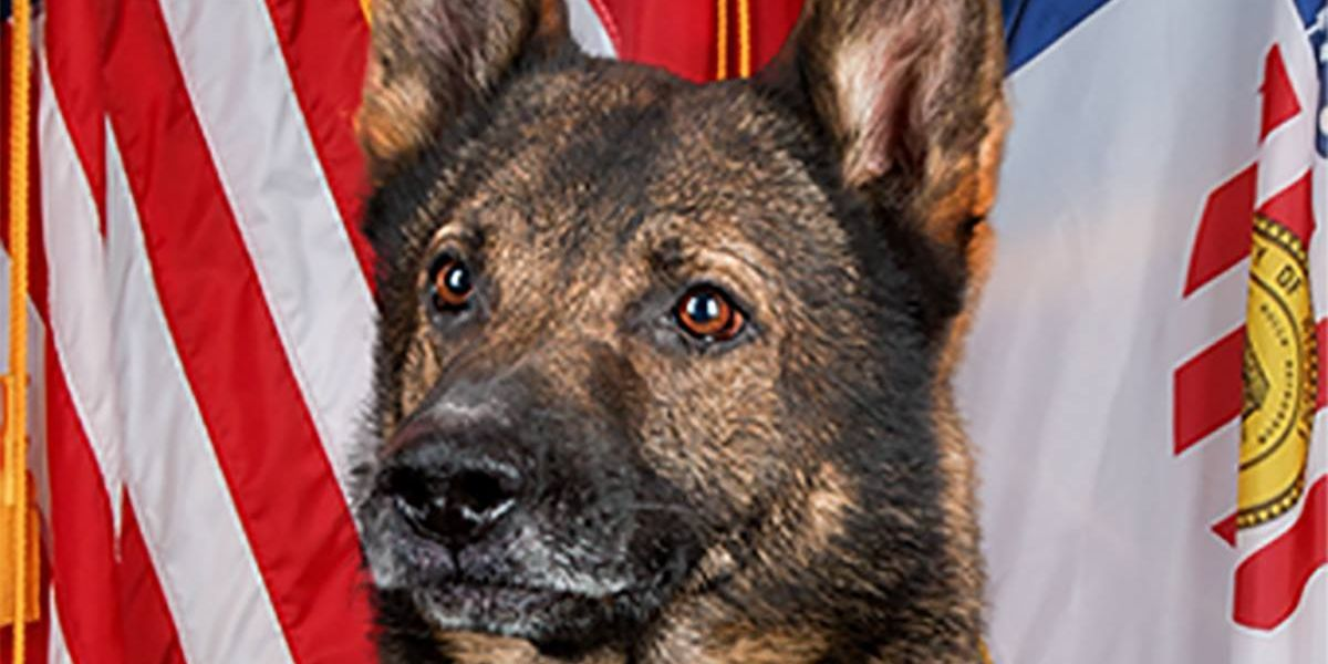 Hickory Police K9, Rony, unexpectedly passes away after five years on force