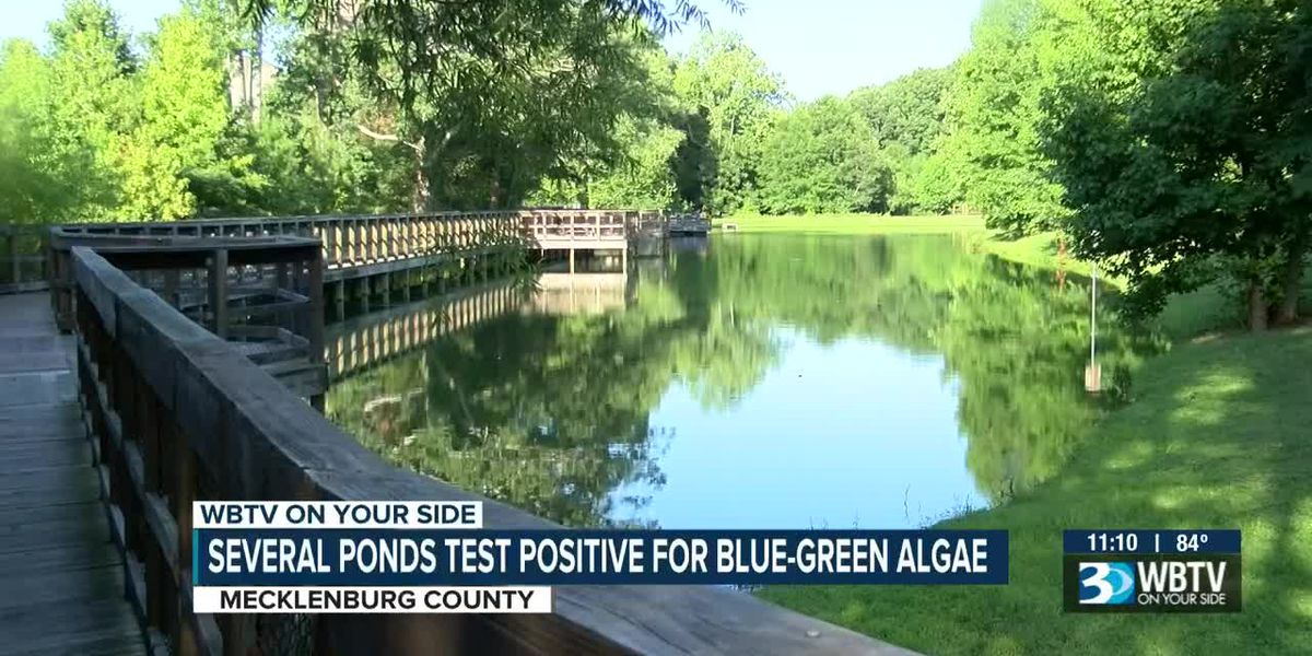 Toxic blue-green algae found in multiple ponds in Mecklenburg County