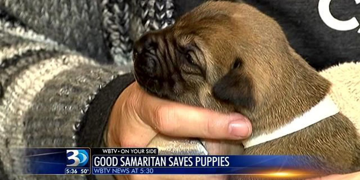 14 Puppies found abandoned on Charlotte roadside