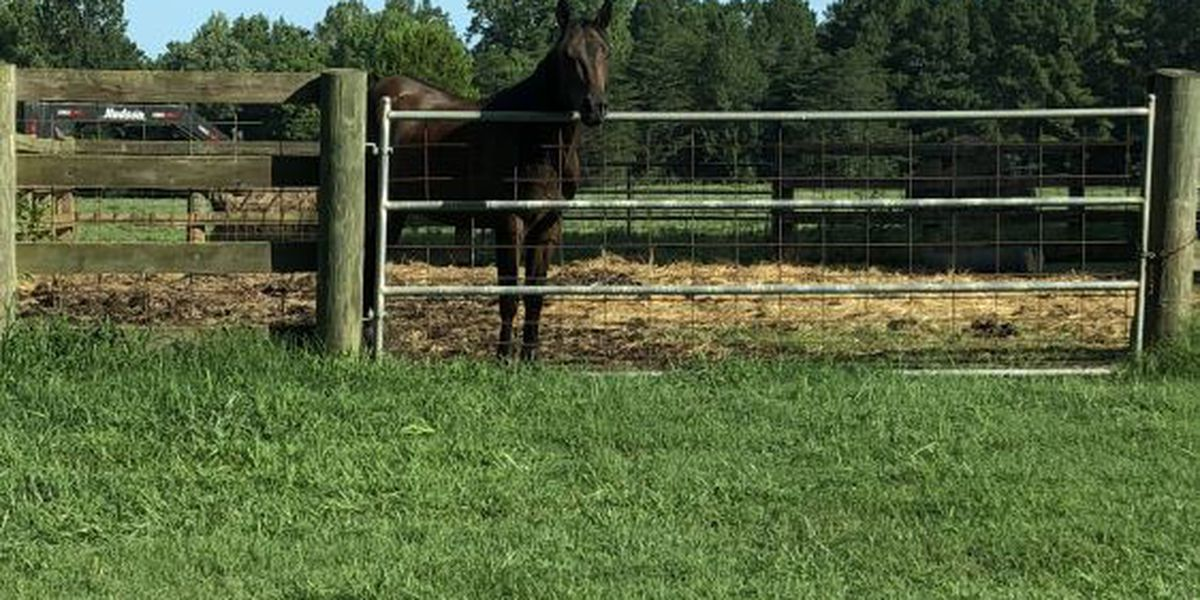 Gaston Co. man finds his horse shot to death in pasture