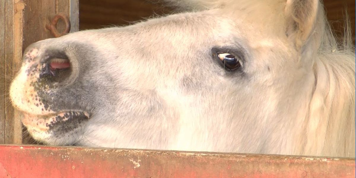Union County horse rescue in danger of closing